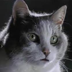 Chris-monson-cat-250x250
